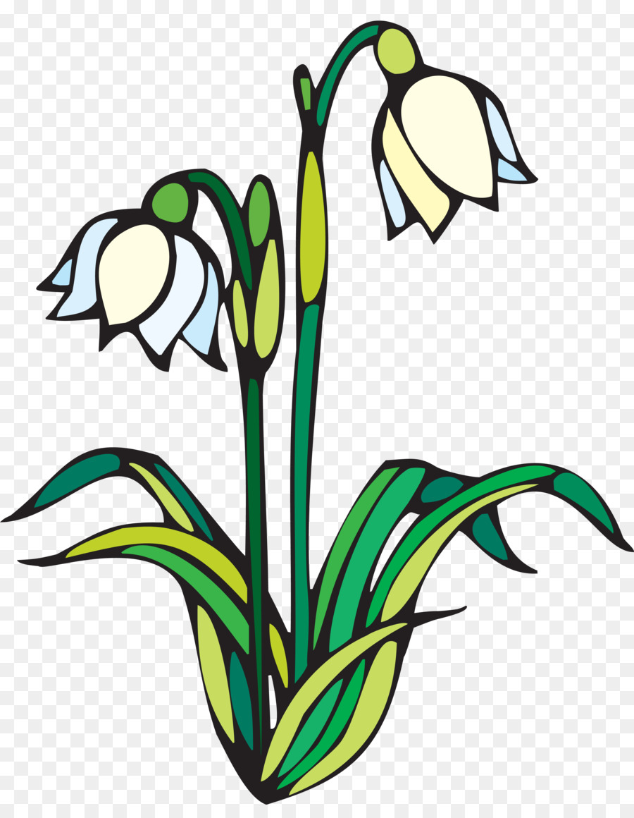 Coloring book Drawing Child Spring - snowdrop png download - 3281 ...