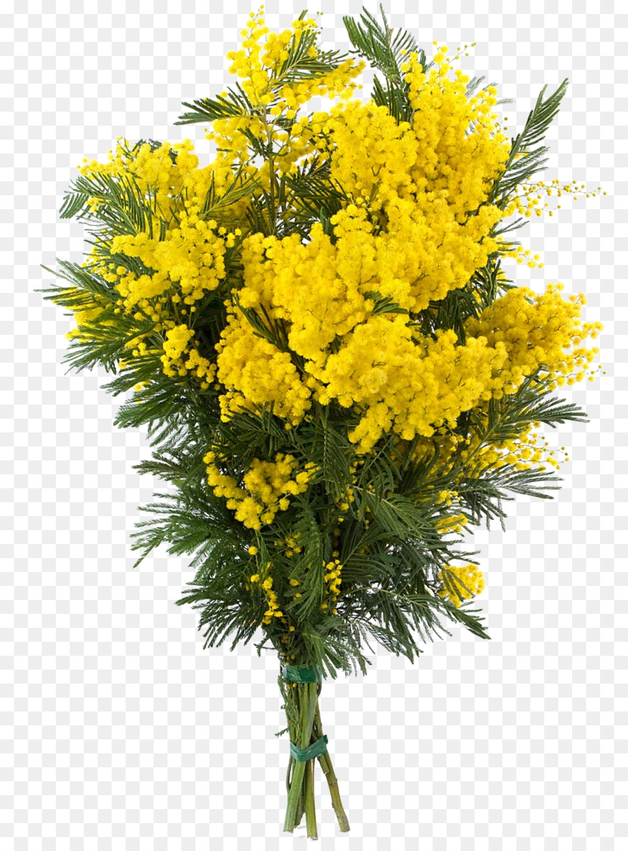 Acacia Dealbata Flower Sensitive Plant Mimosa Png Download 1000