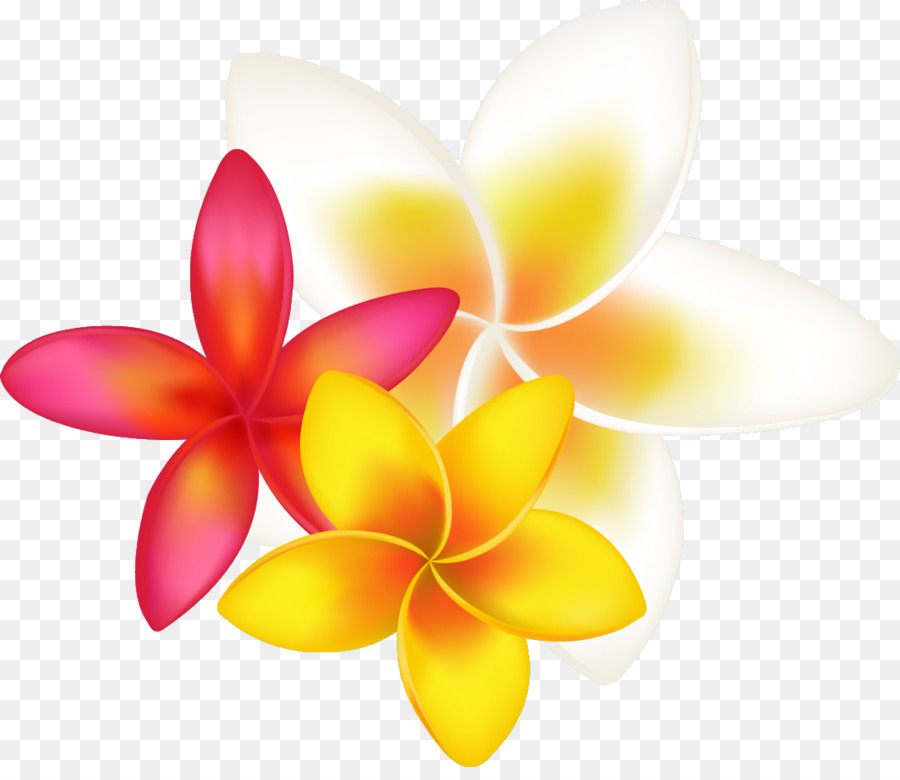 frangipani drawing clip art tropical flower png download abc clip art for kids abc clip art letters