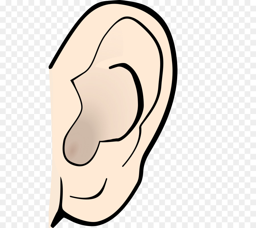 Ear Anatomy Clip art - ear png download - 557*800 - Free Transparent ...