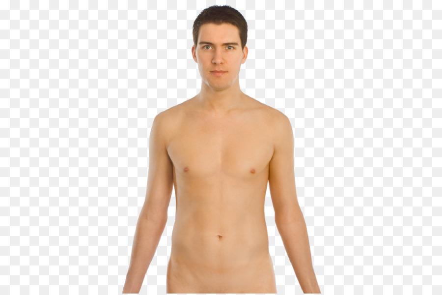 Cuerpo humano el plexo Celíaco y en el Abdomen y el diafragma ...