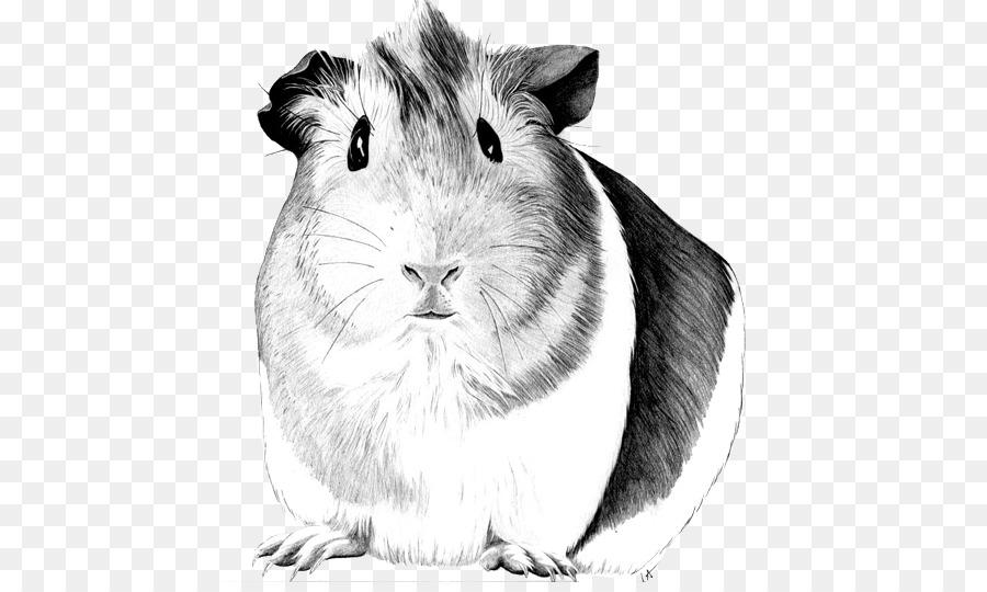 Sheltie Cerdo Dibujo De La Mascota - conejillo de indias Formatos De ...