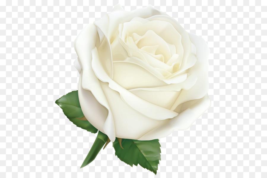 Rosa De Papel Tapiz De Desktop De Clip Art Las Rosas Blancas Png