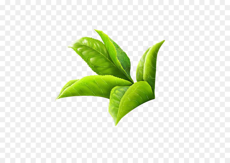 Green tea masala chai white tea leaf watercolor leaf png download green tea masala chai white tea leaf watercolor leaf mightylinksfo