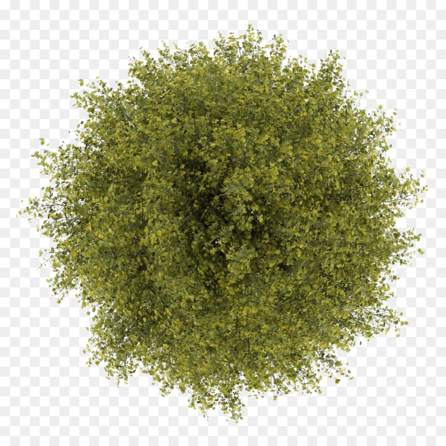 Tree Stock Photography Royalty Free Tree Top View Png Download 1300 1300 Free Transparent