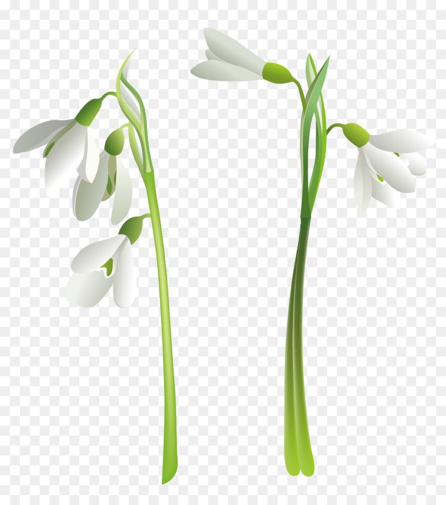 Schneeglöckchen Blume Clipart Schneeglöckchen Png Herunterladen