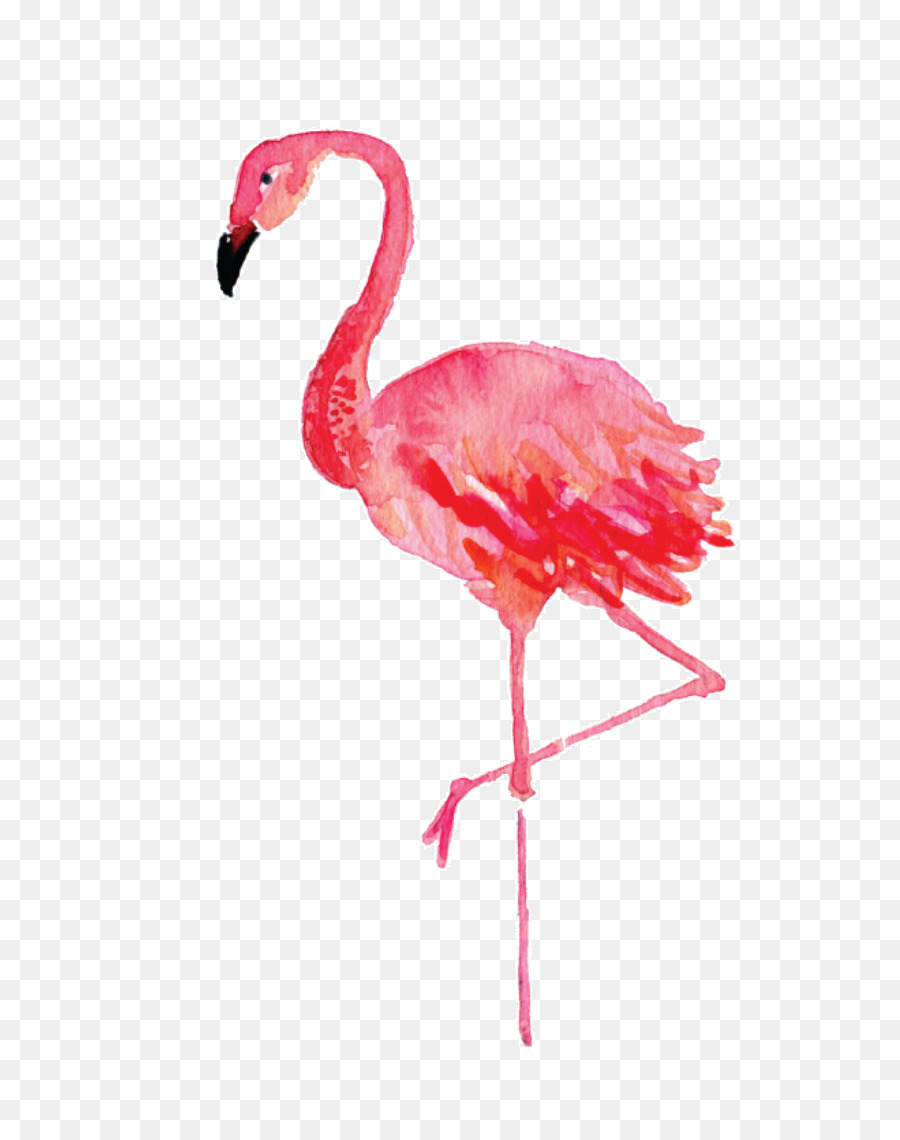 Stephenville Flamingo Watercolor Painting Drawing Canvas