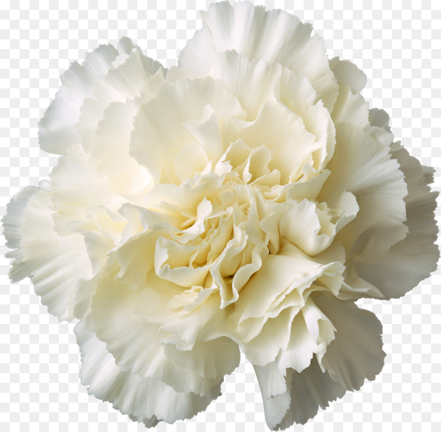 Carnation Cut Flowers White Yellow Gladiolus Png Download 1710