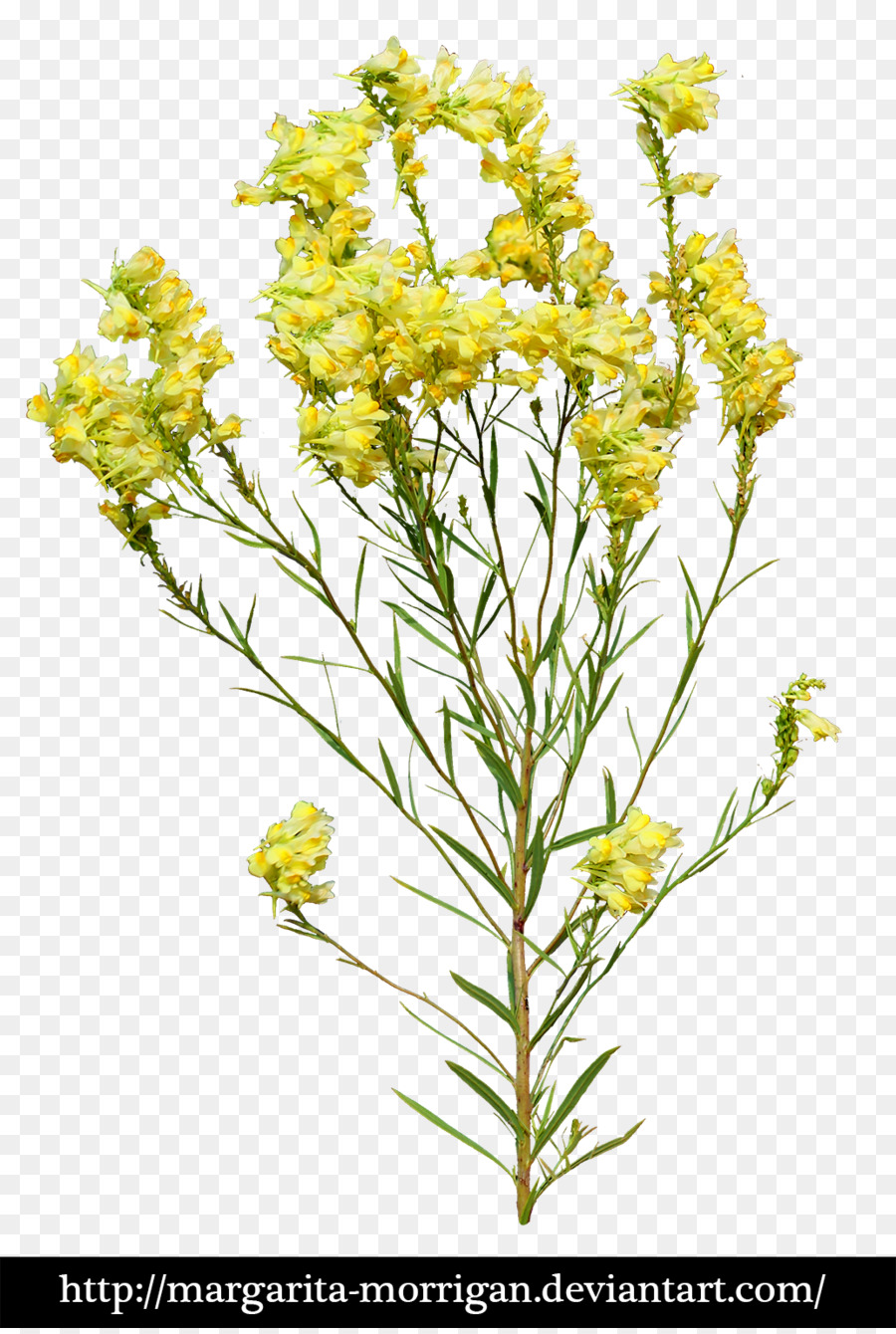Flower plant yellow yellow flowers png download 9001334 free flower plant yellow yellow flowers mightylinksfo