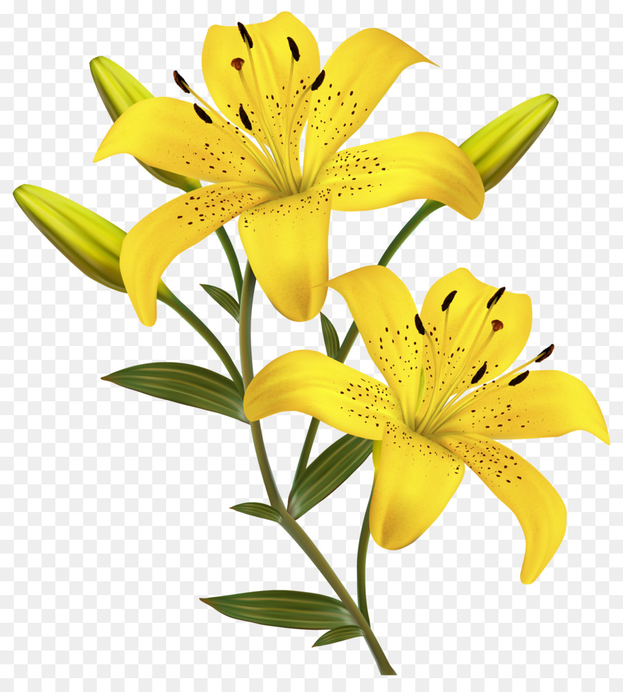 Arum lily easter lily lilium candidum lilium bulbiferum borders and arum lily easter lily lilium candidum lilium bulbiferum borders and frames yellow flowers izmirmasajfo