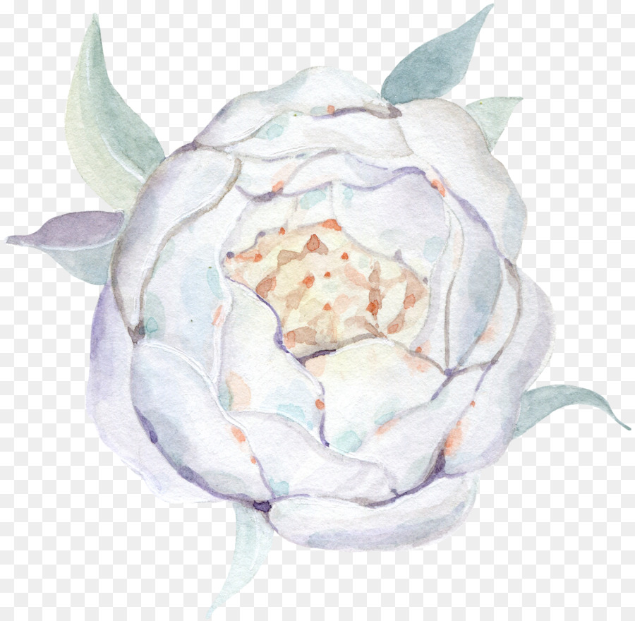 Watercolour Flowers Watercolor Painting Drawing White Rose Png