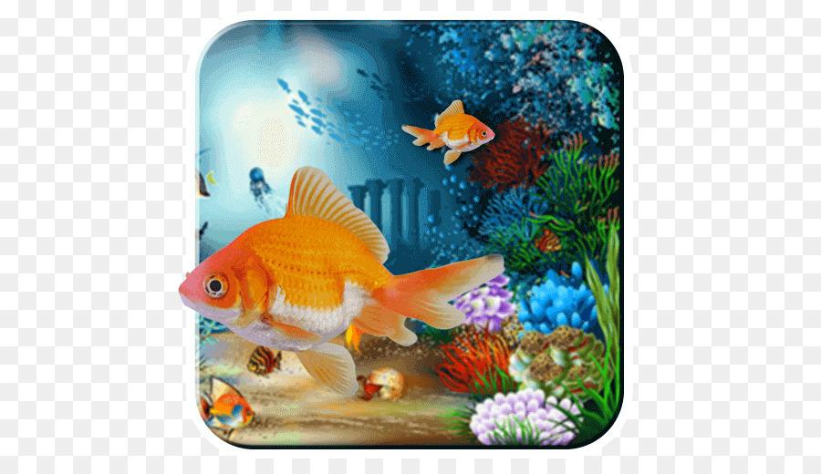 Desktop Wallpaper Sea Underwater Nature