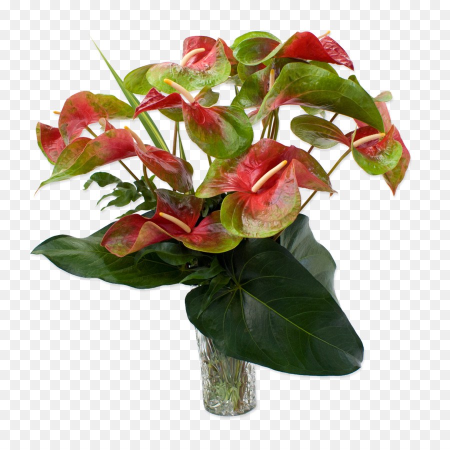 Anthurium andraeanum easter lily flower rose plant tropical png anthurium andraeanum easter lily flower rose plant tropical izmirmasajfo