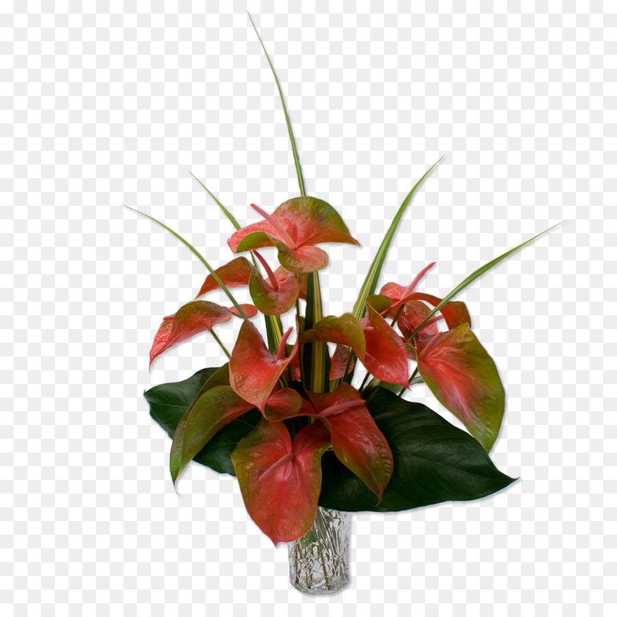 Hawaii Anthurium andraeanum Flower bouquet Cut flowers - tropical ...