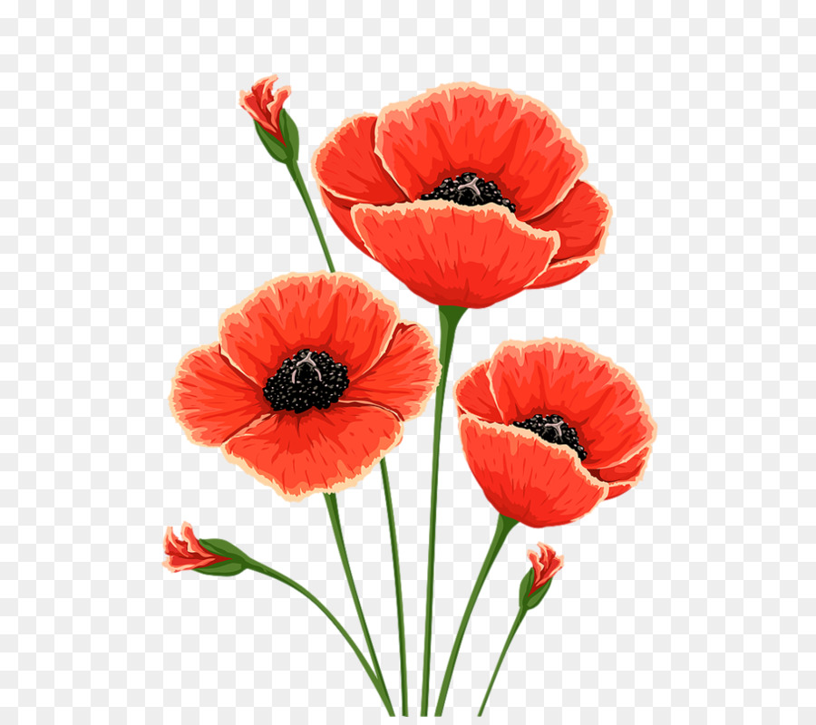 Common poppy flower remembrance poppy clip art poppy png download common poppy flower remembrance poppy clip art poppy mightylinksfo
