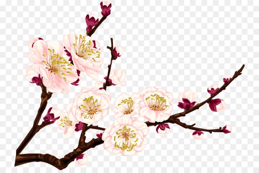 Plum blossom drawing clip art chinese flower png download 800 plum blossom drawing clip art chinese flower mightylinksfo