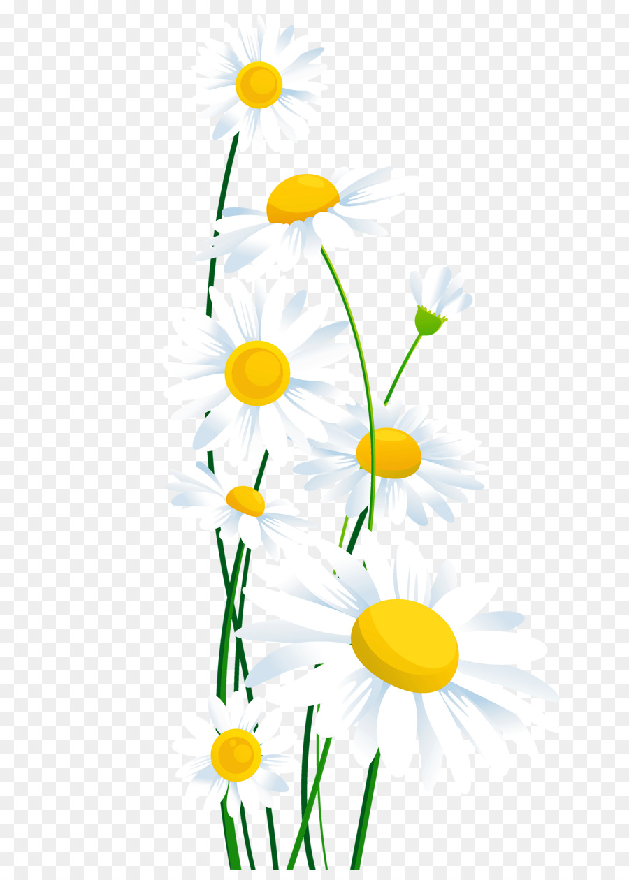 Common daisy flower clip art daisy png download 7921245 free common daisy flower clip art daisy izmirmasajfo