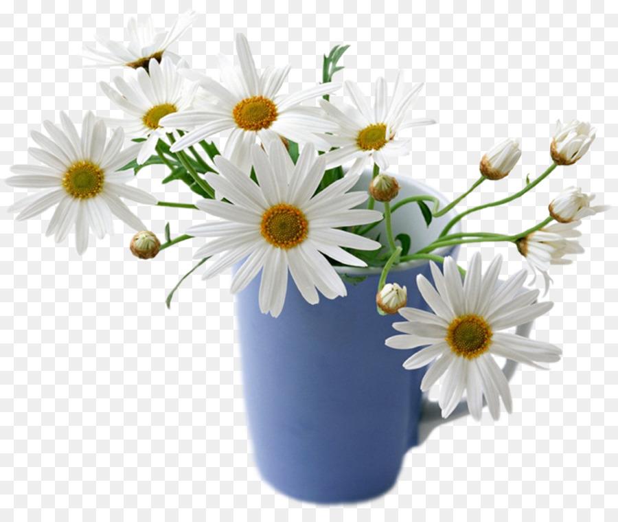 Flower desktop wallpaper common daisy rose white good morning png flower desktop wallpaper common daisy rose white good morning mightylinksfo