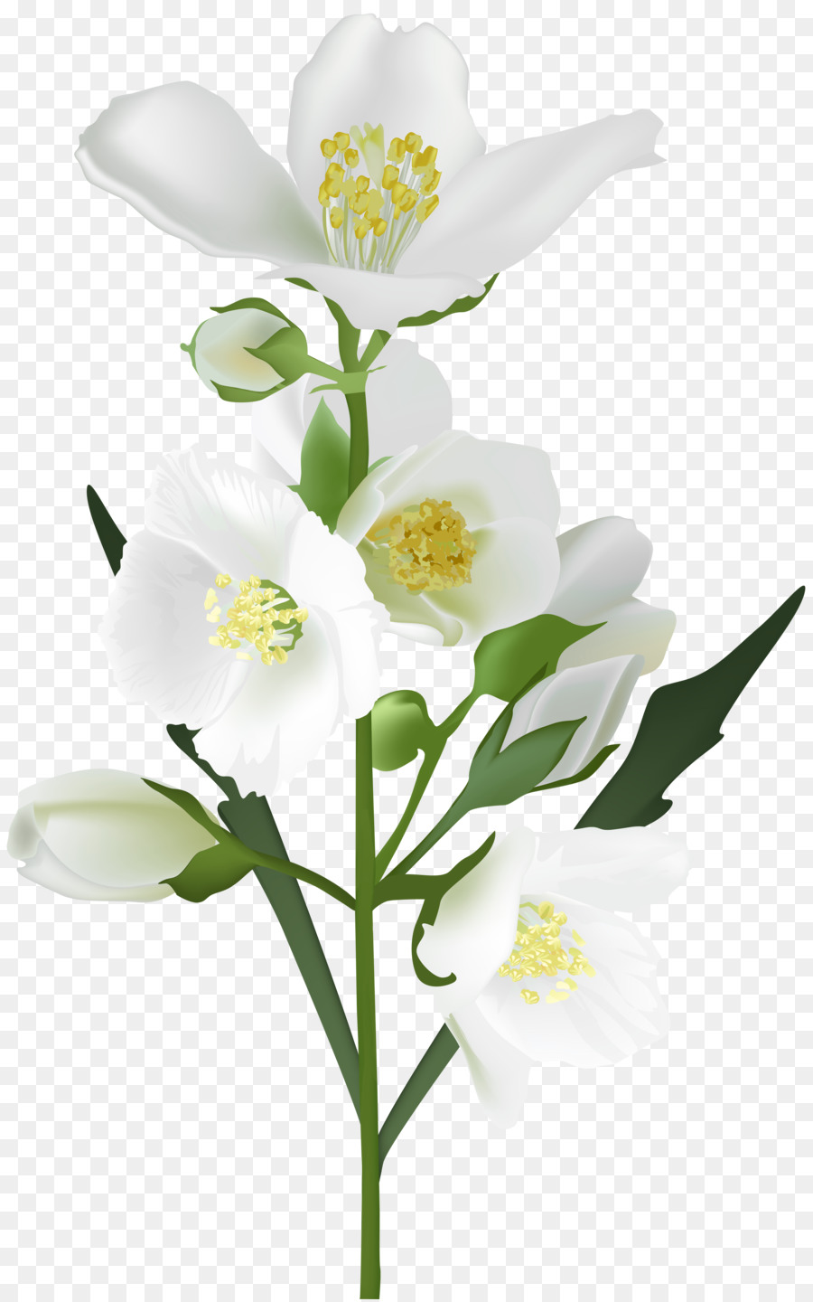 Flower White Clip Art Jasmine Flower Png Download 50098000