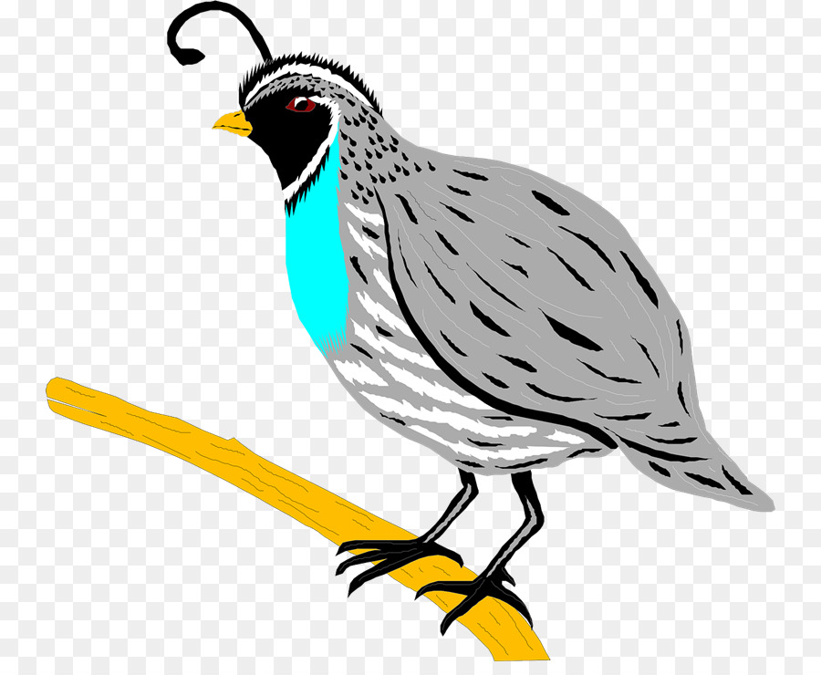 quail bird partridge clip art quail png download 800 725 free rh kisspng com quail clip art black white quail clip art black white