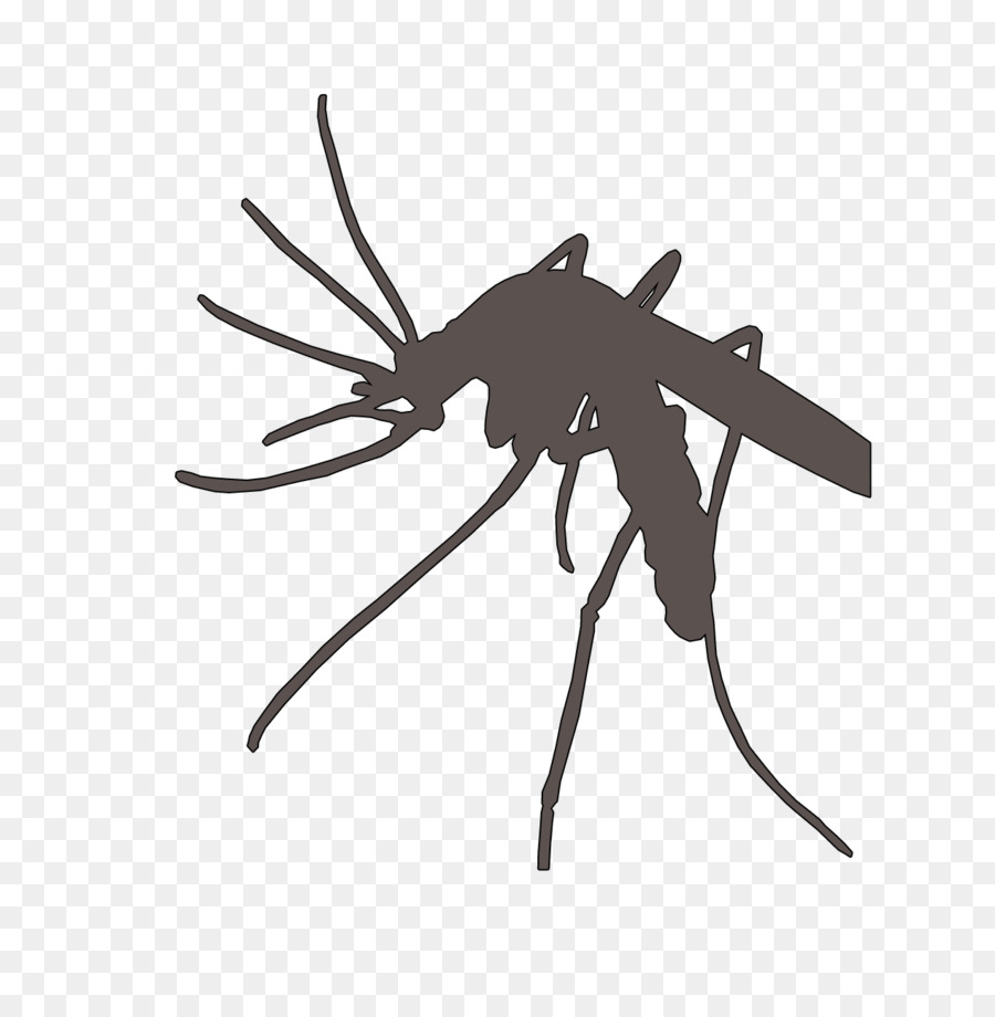 Mosquito Insect Black Silhouette Animal Vector Image