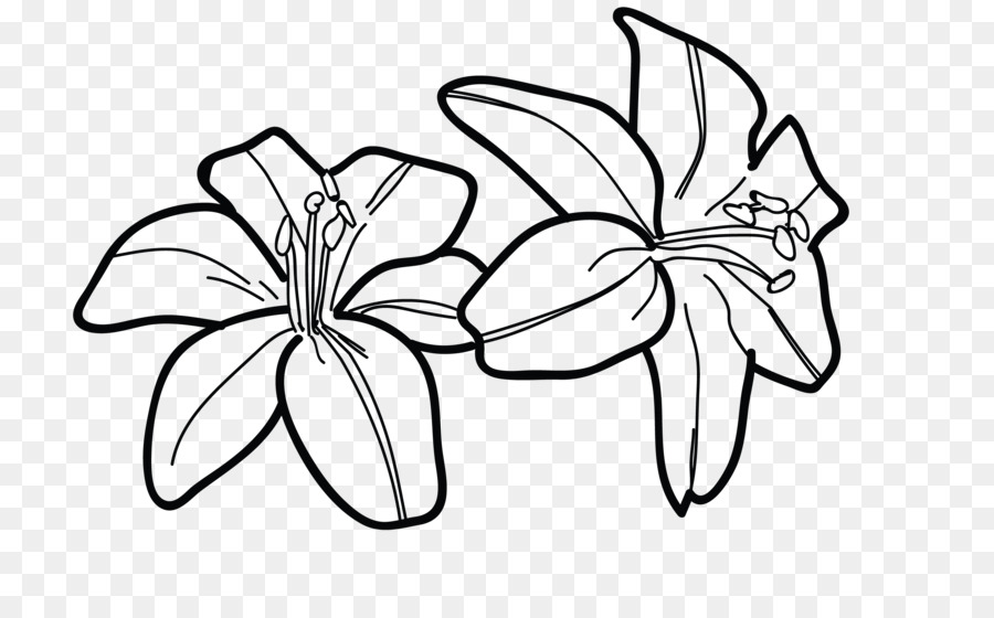 tiger lily drawing line art flower - draw png download - 2650 1600