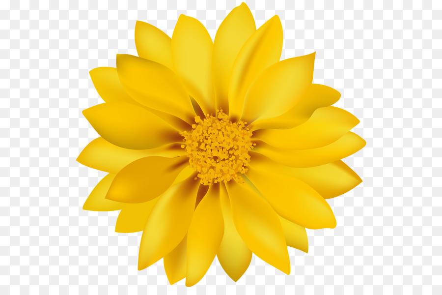 Dandelion Flower Common Daisy Yellow Transvaal Daisy Yellow