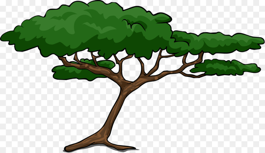 african trees wattles acacia clip art cartoon tree png download rh kisspng com Portrait Clip Art Theme Clip Art