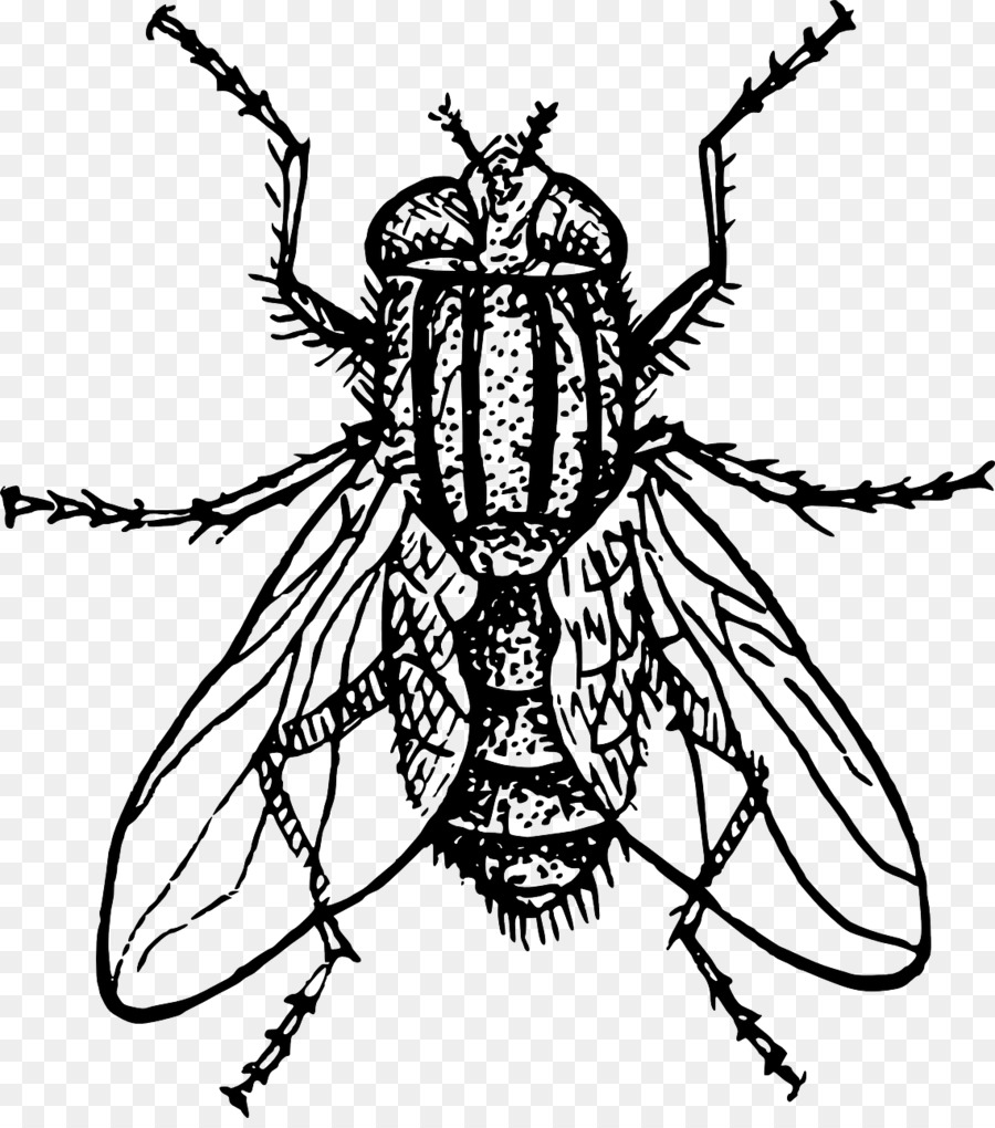 housefly drawing clip art flies png download 1139 1280 free rh kisspng com Black and White Bee Clip Art Foot Clip Art Black and White