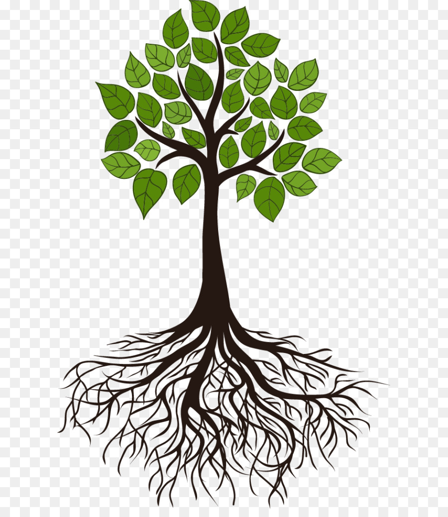 Tree Root Branch Clip Art Root Png Download 669 1024 Free