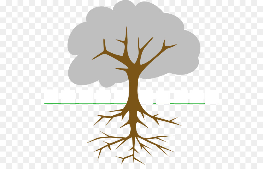 The Great Kapok Tree Branch Clip Art Root Png Download 600 575