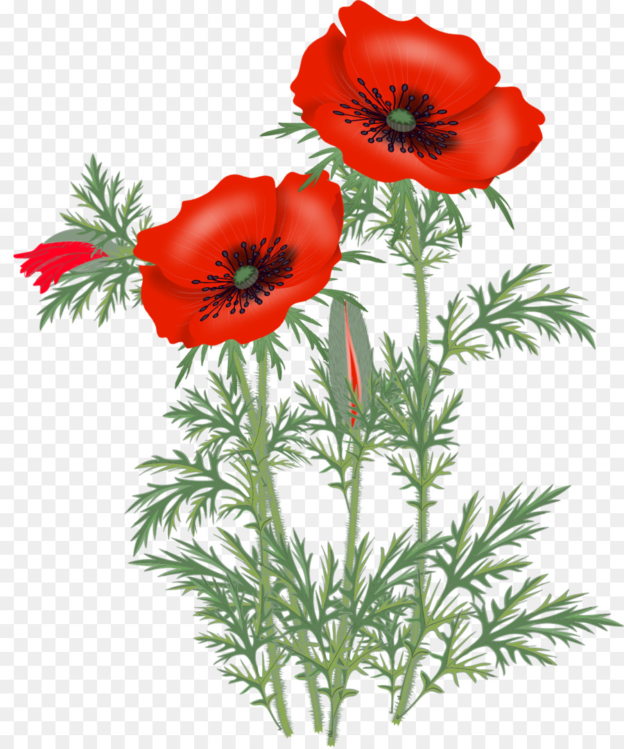 Opium Poppy Flower Clip Art Poppy Png Download 13161575 Free