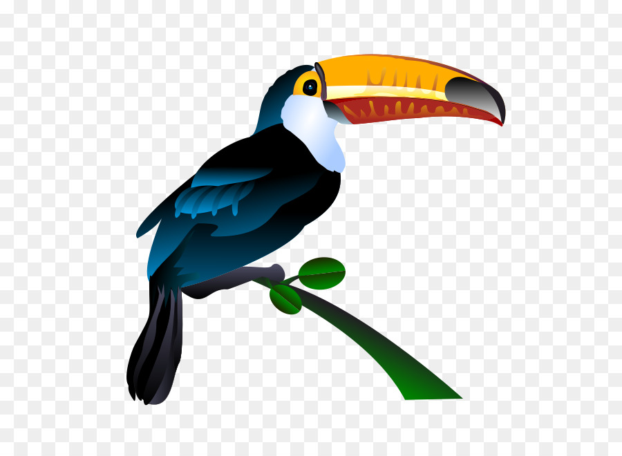 bird toucan clip art toucan png download 566 648 free rh kisspng com toucan clipart gif toucan clipart free