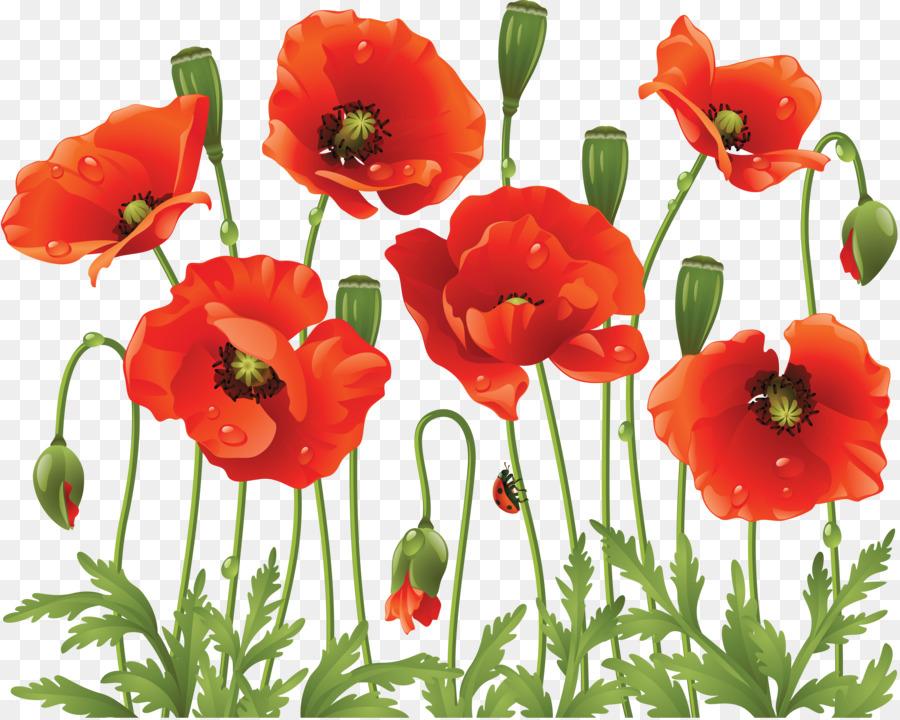 Common poppy flower clip art poppy png download 61754926 free common poppy flower clip art poppy mightylinksfo