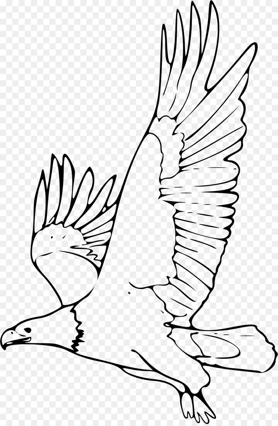 Águila calva Dibujo Clip art - para colorear Formatos De Archivo De ...