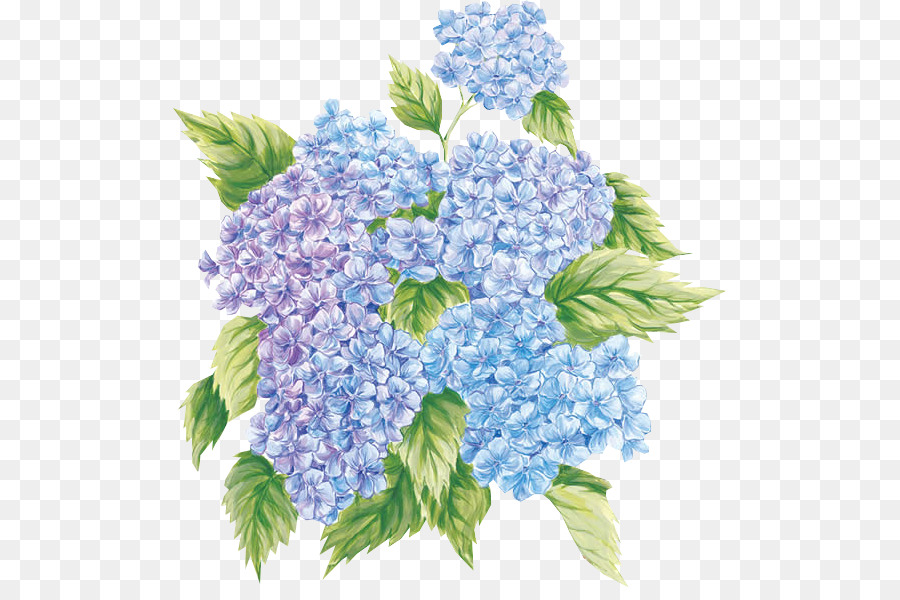 French hydrangea flower paper painting clip art hortensia png french hydrangea flower paper painting clip art hortensia mightylinksfo