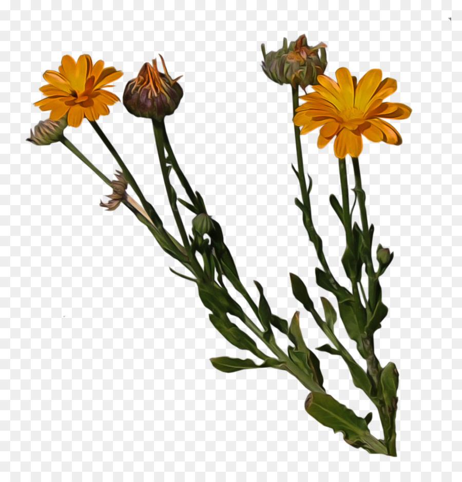 Cut flowers Pot marigold Plant stem - orange flower png download - 858*931 - Free Transparent Flower png Download.