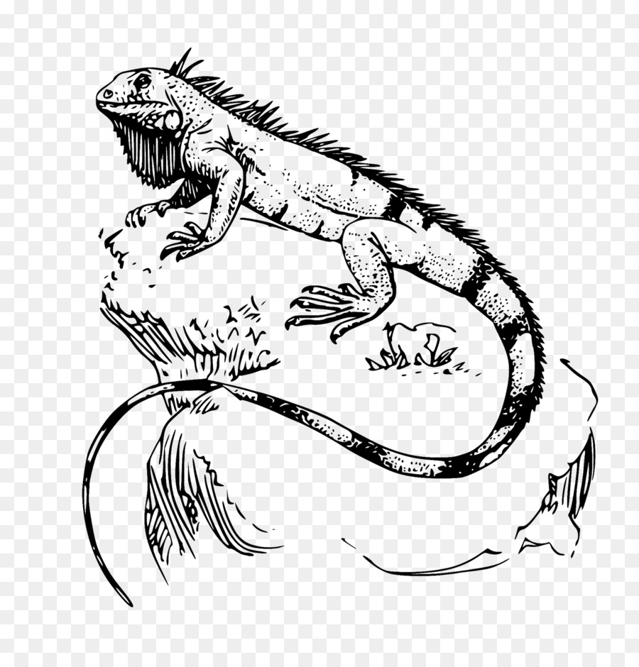 Green Iguana Lizard Reptile Drawing