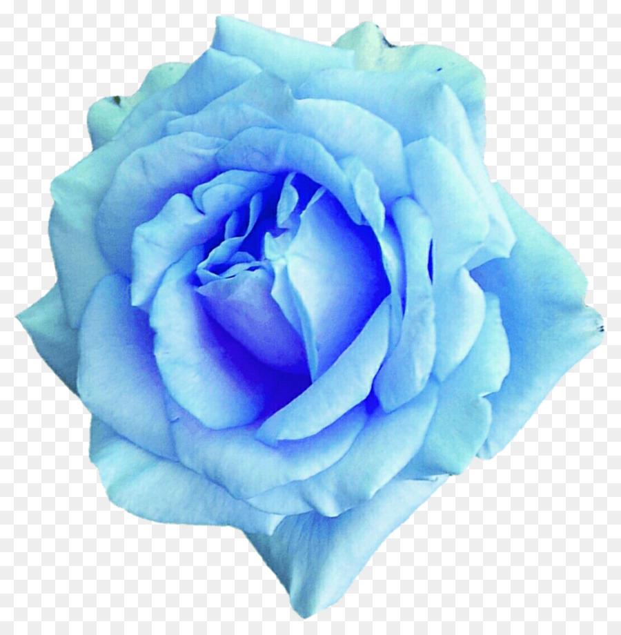 Centifolia Roses Blue Rose Flower Garden Roses Watercolor Sky Png