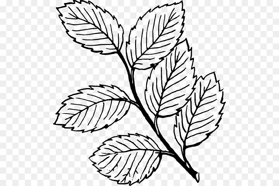 Look At Leaves Leaf White Clip Art Mint Png Download 558 Rh Kisspng Com Peppermint Candy Coloring Page Line Drawings Of Candies