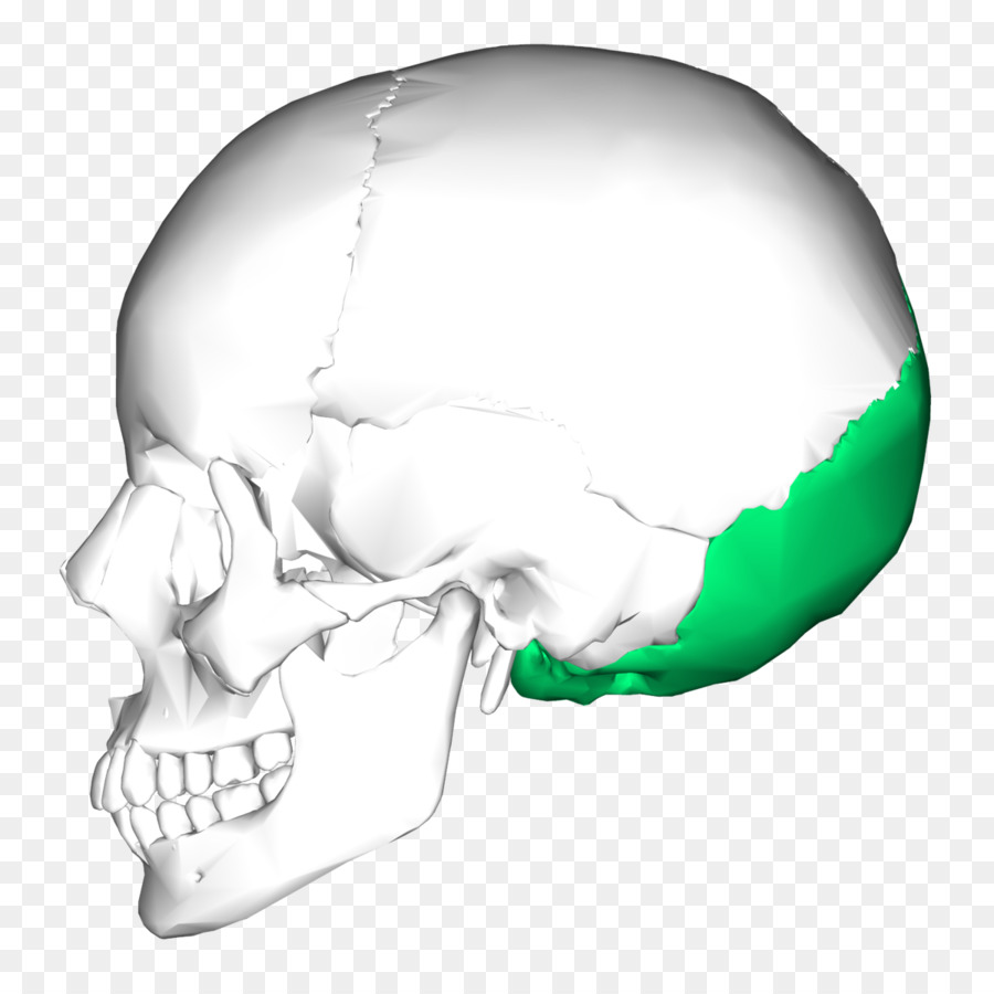 Occipital bone Skull Sphenoid bone Temporal bone - bone png download ...