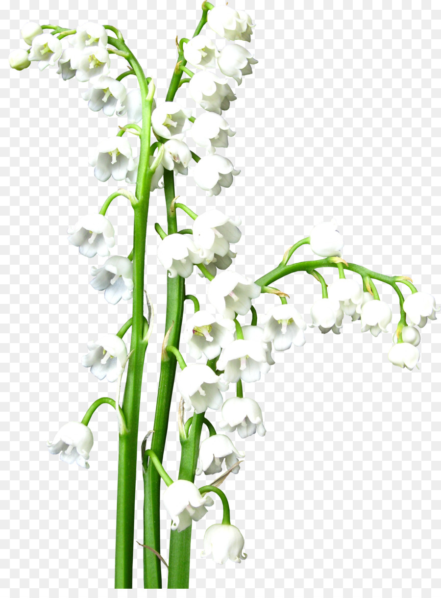 Flower lily of the valley white clip art lily of the valley png flower lily of the valley white clip art lily of the valley izmirmasajfo