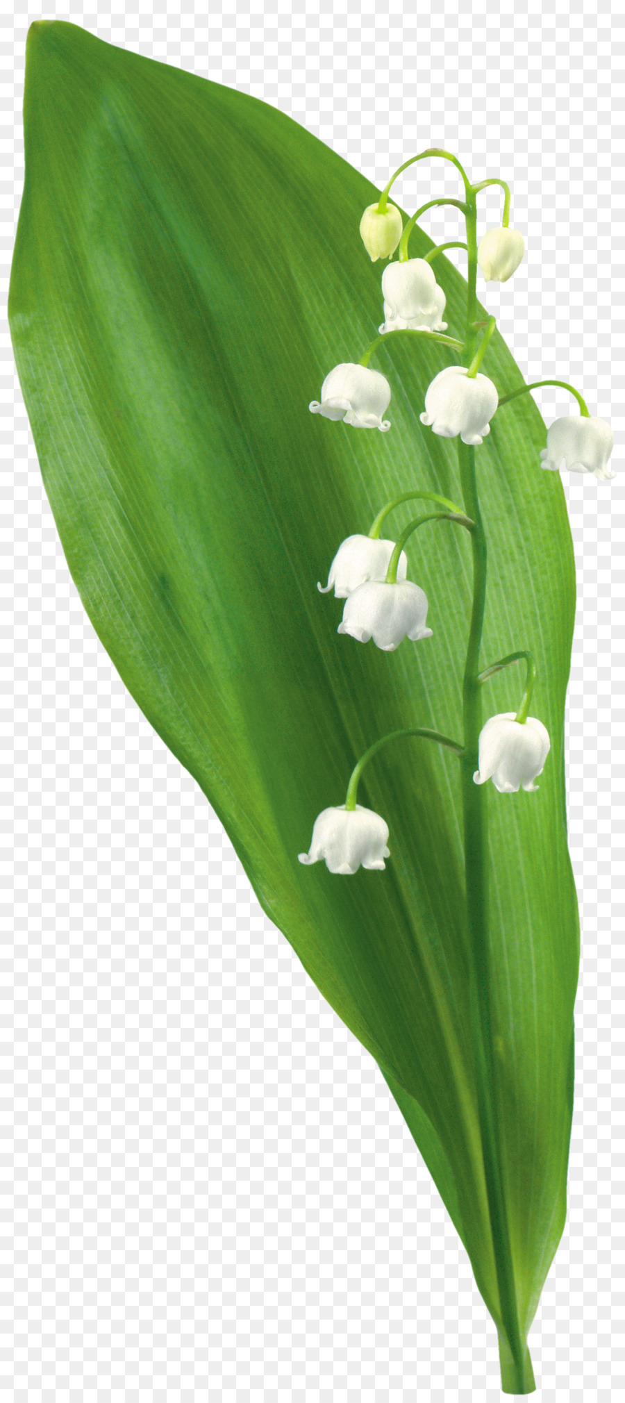 Flower plant tree clip art lily of the valley png download 1990 flower plant tree clip art lily of the valley izmirmasajfo