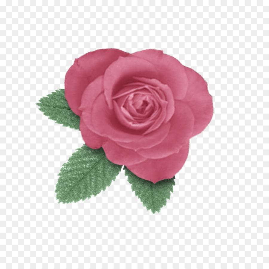 Centifolia Roses Paper Flower Garden Roses Rosaceae Rose Png
