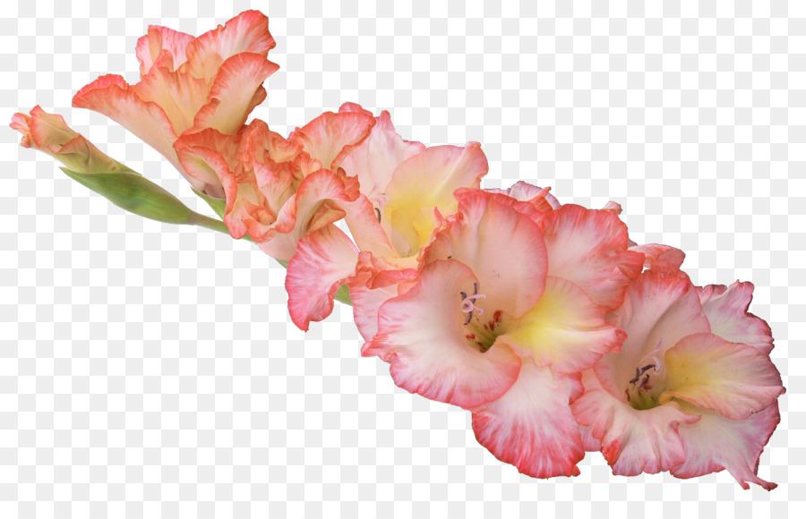 Display resolution gladiolus high definition television tropical display resolution gladiolus high definition television tropical flowers mightylinksfo