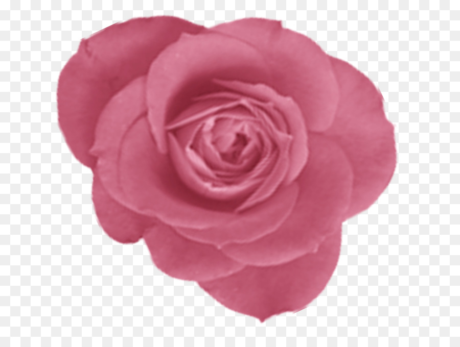 Centifolia Roses Paper Flower Garden Roses Scrapbook Png Download