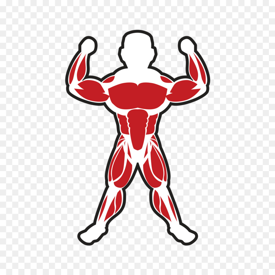 Skeletal Muscle Bodybuilding Adipose Tissue Muscle Png Download
