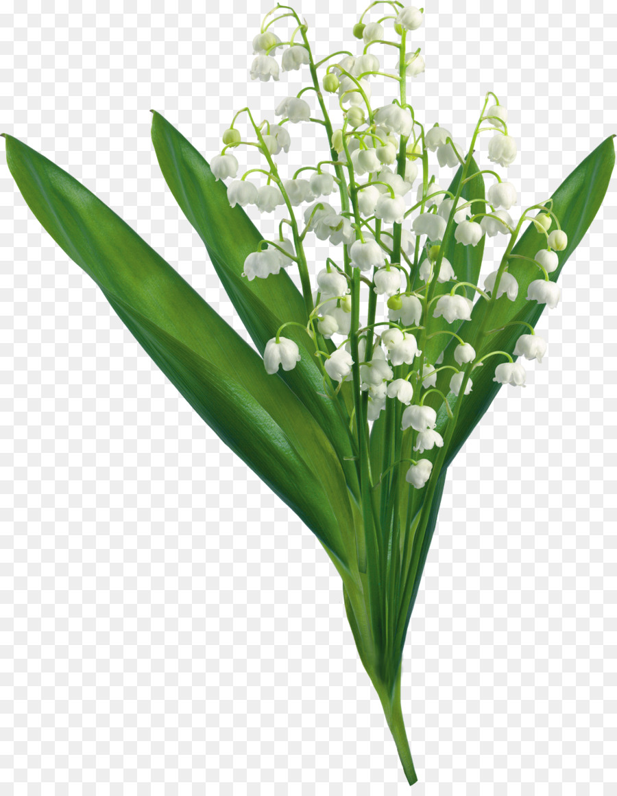 Text Flower Clip Art Lily Of The Valley Png Download 11001401