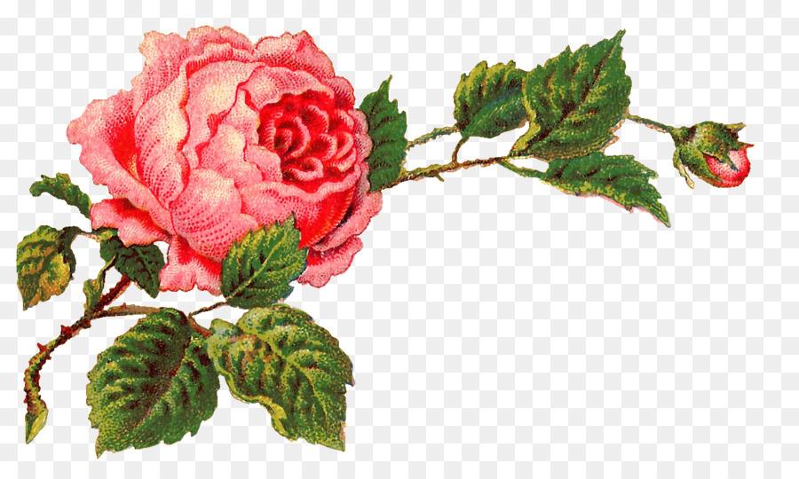 Rose Vintage Clothing Clip Art