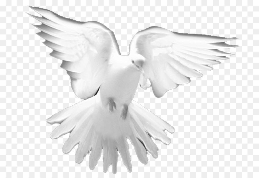 Holy Spirit Water Bird png download - 835*620 - Free Transparent